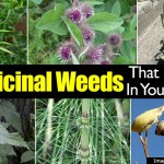10 Medicinal Weeds That May Grow In Your Backyard