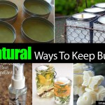 7 Natural Ways To Keep Bugs Away
