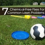 7 Chemical-Free Fixes For Common Lawn Problems