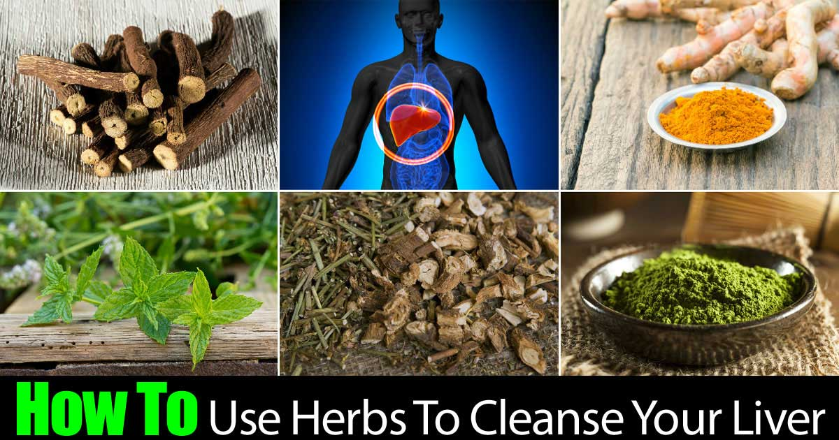 herbs-cleanse-liver-22820151175