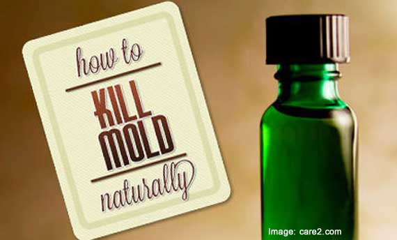 Vinegar To Kill Mold >> 3 Natural Ways To Kill Mold