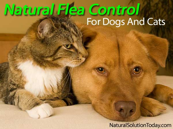 Natural Flea Collars For Cats And Dogs
