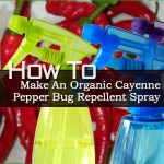 How To Make An Organic Cayenne Pepper Bug Repellent Spray