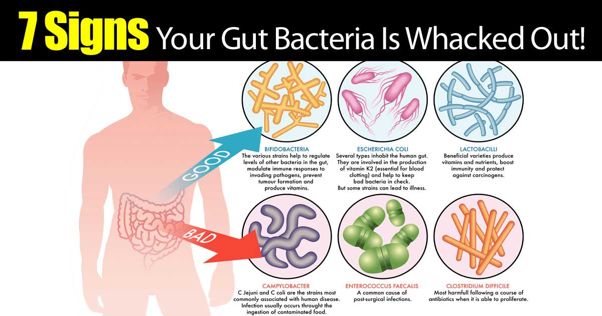 how to increase good bacteria in gut naturally