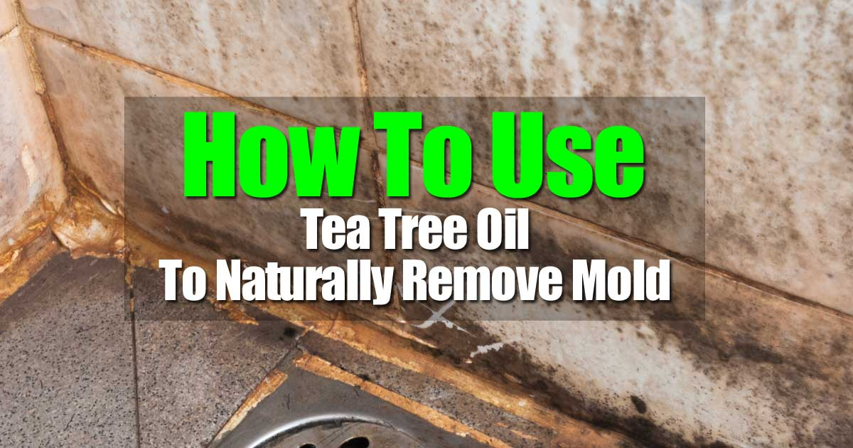 tea-tree-oil-mold-103114