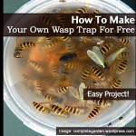 How To Easily Make Your Own Wasp Trap